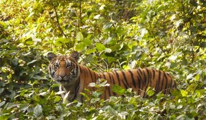 Why Visit Dudhwa National Park