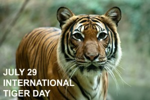 International World Tiger Day Proves Wildlife Tourism Increased In India