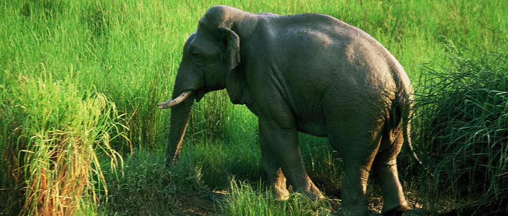 Elephant Safari to Dudhwa - Online Jeep Safari Booking To Explore Dudhwa National Park
