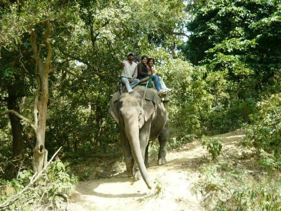 Online Jeep Safari Booking Dudhwa - Elephant Safari Tour
