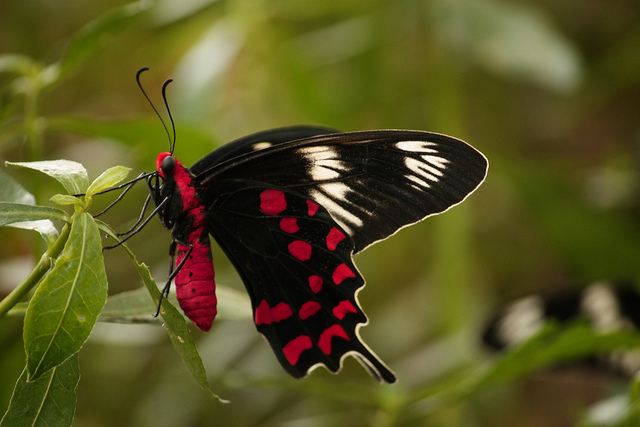 Butterflies Of Dudhwa  - Must Know Fact About Butterflies