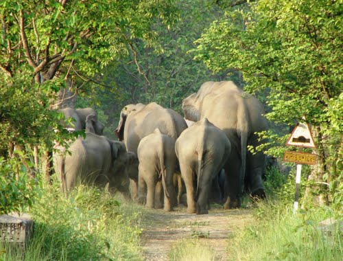 Elephant In Dudhwa National Park