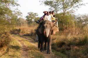 Elephant Safari in katerniaghat