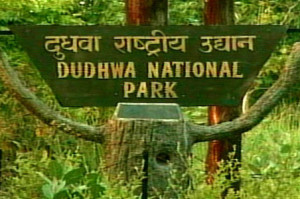 Choose The Best Tour Package To Explore Dudhwa National Park