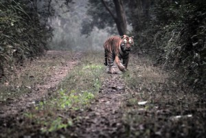 Enchanted Dudhwa Tour Package For Dudhwa wild Animals