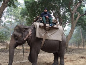 Elephant safari for Rhino sighting in Dudhwa National Park