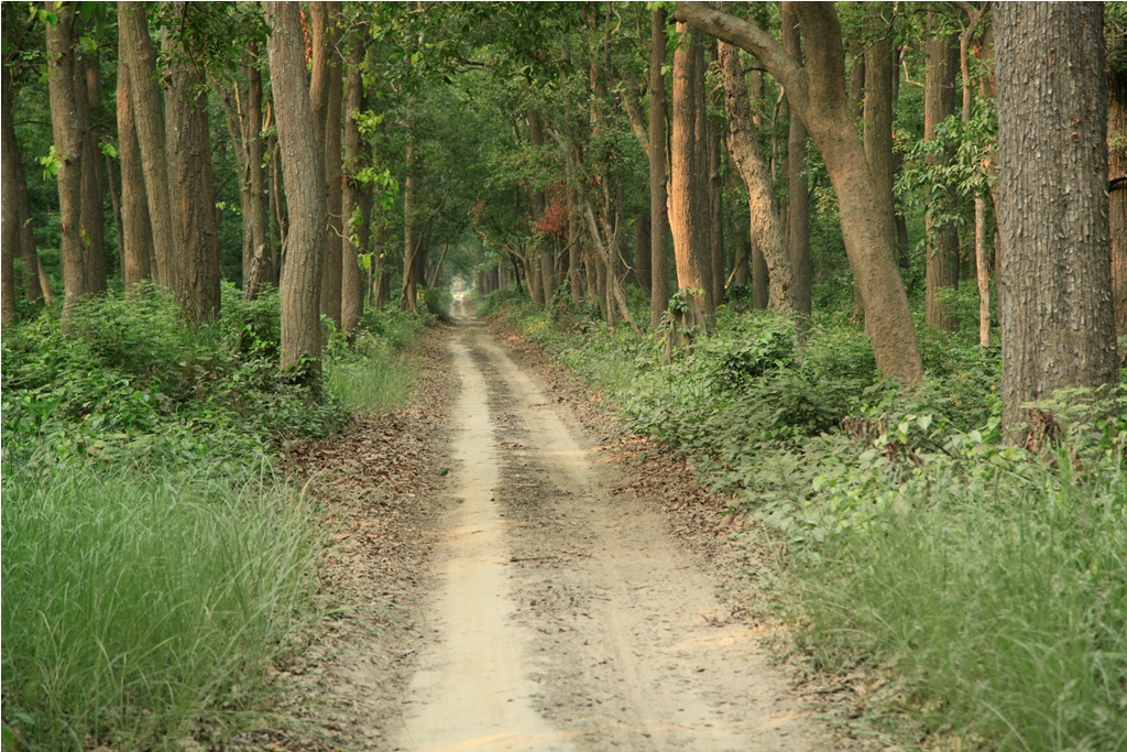 Flora and Fauna In Dudhwa National Park