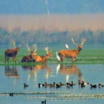 Kishanpur Wildlife Sanctuary - Birds and animal species in Kishanpur