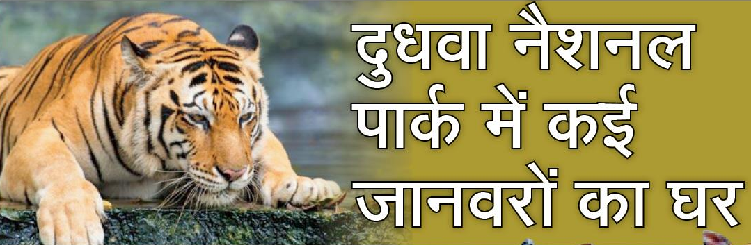 Dudhwa National Park- Home for animals
