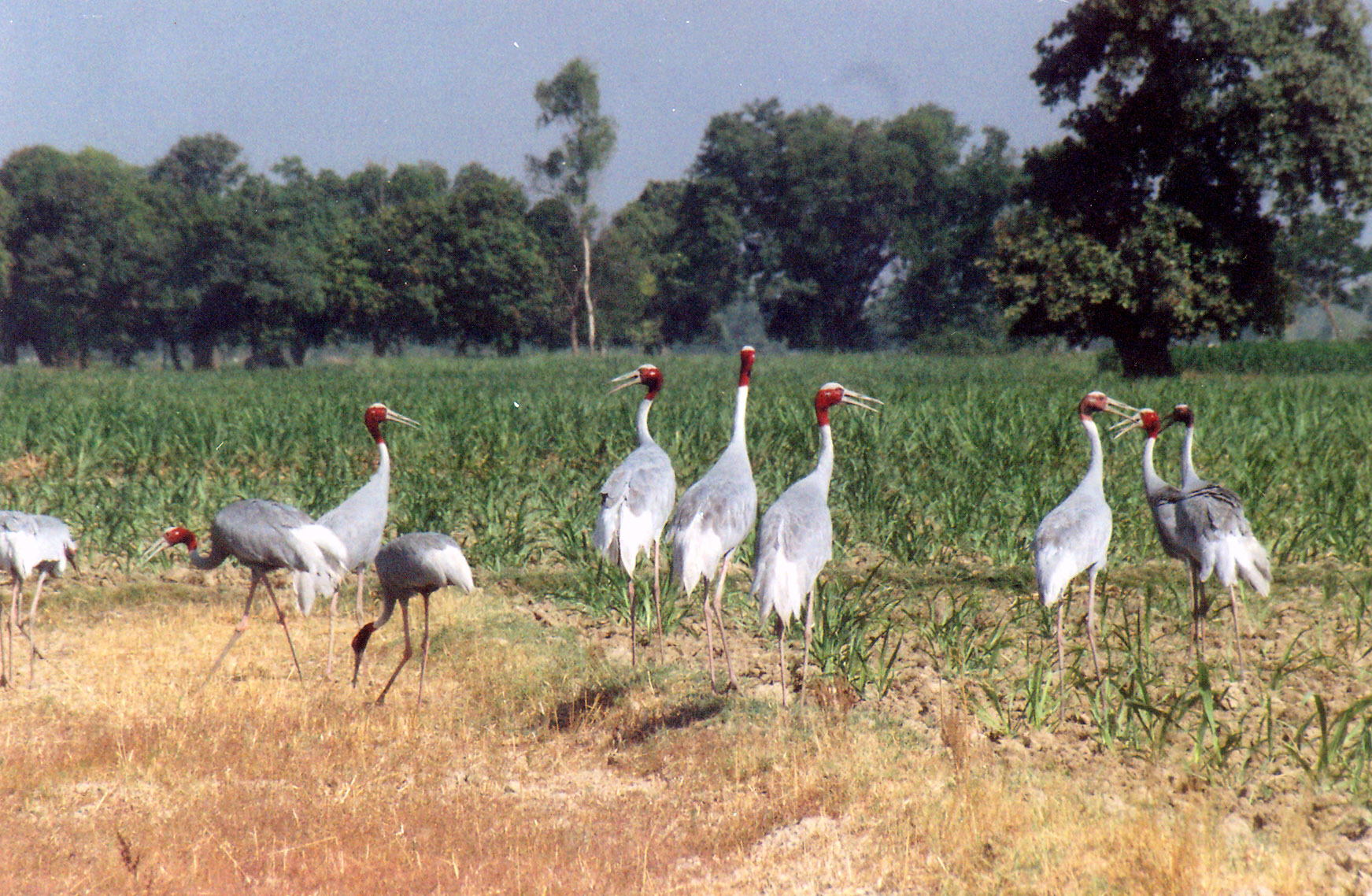 Kishanpur Wildlife Sanctuary