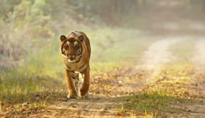 Do's & Don'ts in Dudhwa National Park